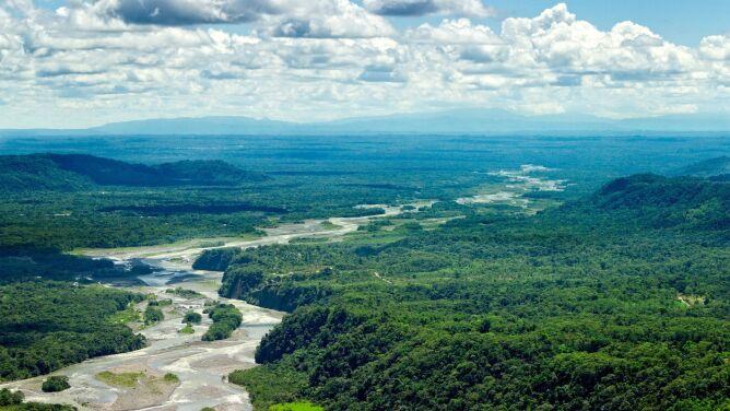 Asteroida, która zabiła dinozaury, mogła dać początek lasom deszczowym