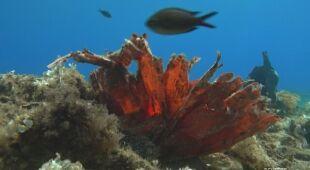 Plastikowa rafa koralowa